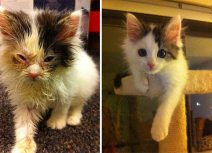 amazing-rescue-cat-transformation-3