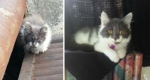 Before-and-after-cat-rescue-pictures-5