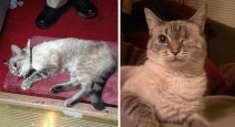 rescue-cat-abandoned-before-after-172__700